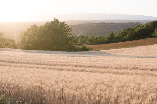 Scenic Setting | Fine Art Destination Wedding Inspiration In The Corn Fields Of Aix en Provence by Julie Michaelsen Photography