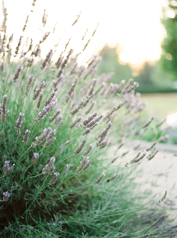 Lavender | French Provence Wedding Inspiration by Savan Photography