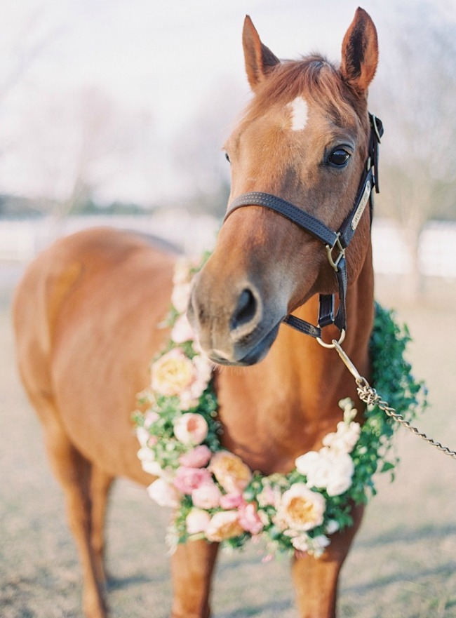 horse-with-floral-wreath